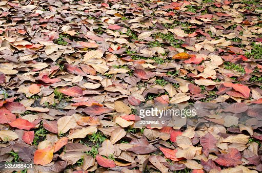 leafs on the ground : Stock Photo