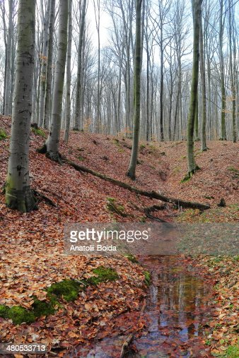 Leafy forest by an early spring : Stockfoto