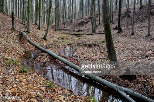 Leafy forest : Stock Photo