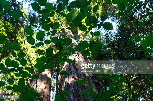 El frondoso Green : Foto de stock