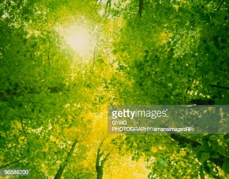 Leafy tree branches : Stock Photo