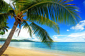 Leaning palm tree at the beach on Nananu-i-Ra island, Fiji. Tourism is the main industry of Nananu-I-Ra