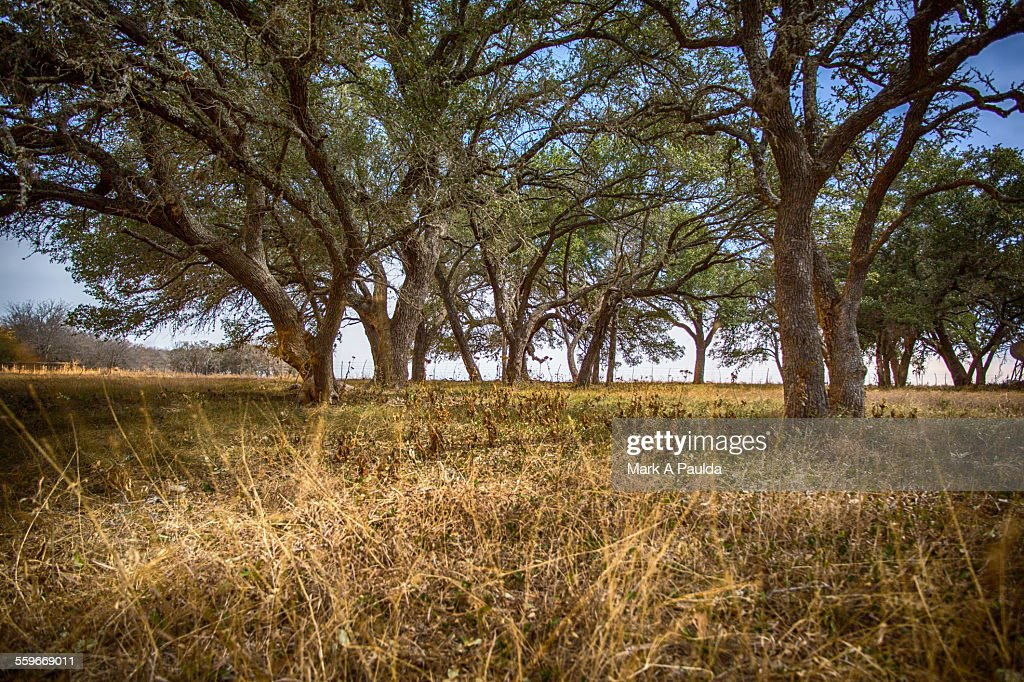 Leaning trees in woods : Photo