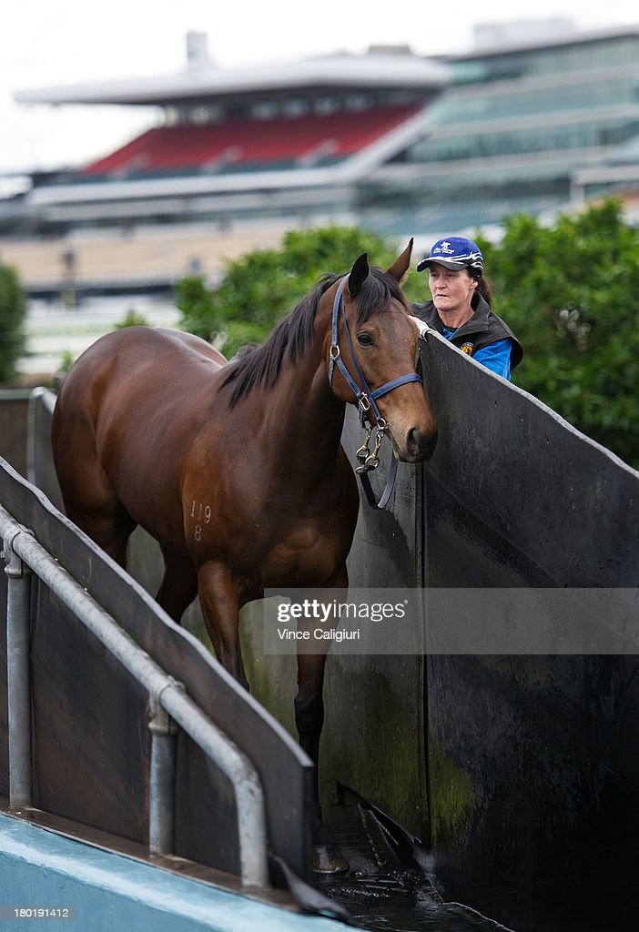 Leanne Pollard takes Atlantic Jewel for a swim at Flemington Racecourse on September 10, 2013 in Melbourne, Australia.