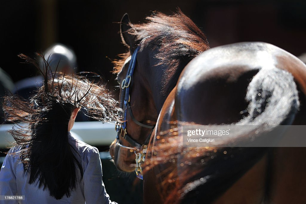 Leanne Pollard (strapper) walks Atlantic Jewel after winning the New Zealand Bloodstock Memsie Stakes during Melbourne racing at Caulfield Racecourse on August 31, 2013 in Melbourne, Australia.