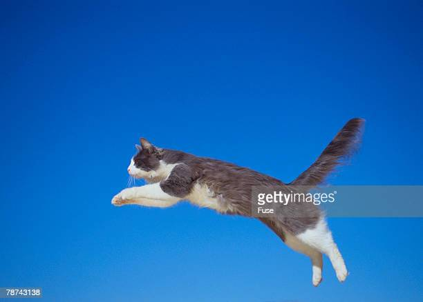 Leaping Cat