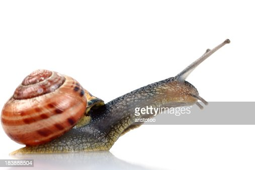 Leaping Snail, Isolated on White