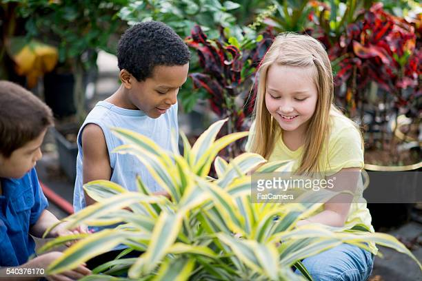 Learning About Plants in a Nursery