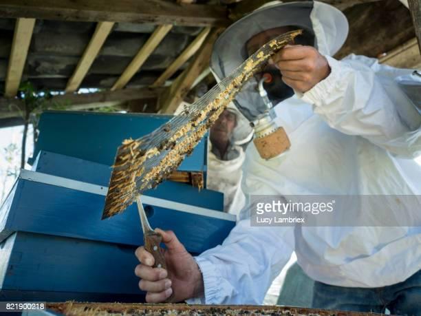Learning beekeeping