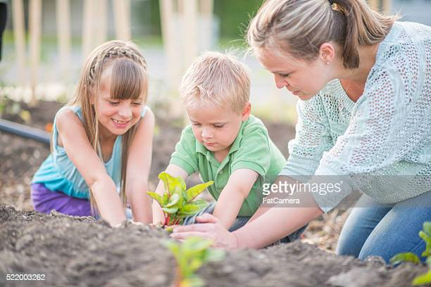 Lernen, wie sie Pflanze