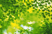 Leaves and branches of tree