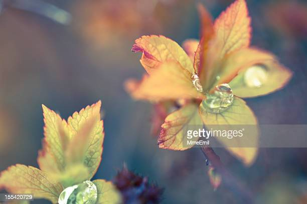Leaves And Raindrops