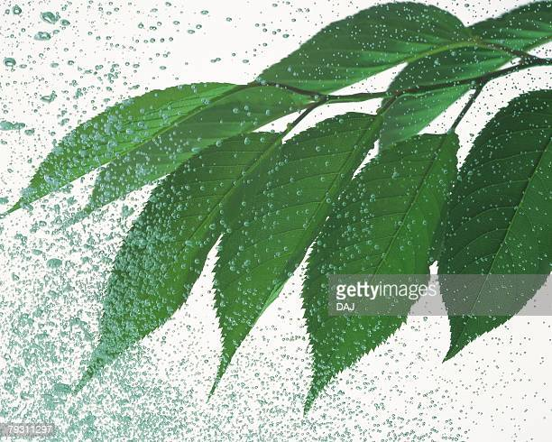 Leaves and Water Spray, Close Up