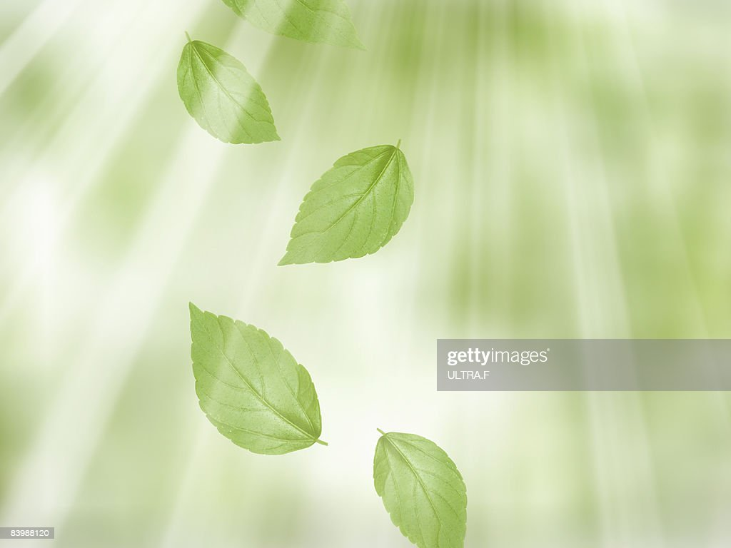 Leaves are getting sunshine. : Stock Photo