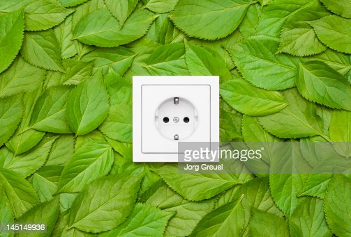 Leaves around an electrical outlet