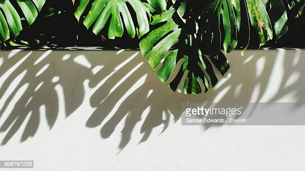 Leaves By Wall On Sunny Day