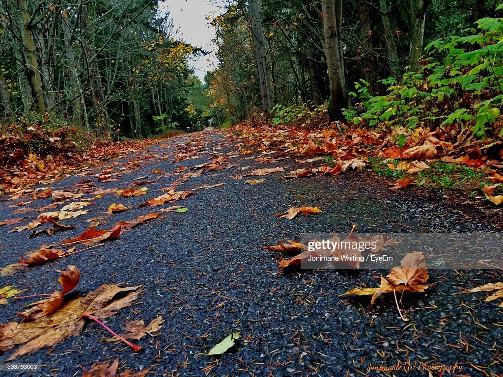 Leaves Covering Pathway