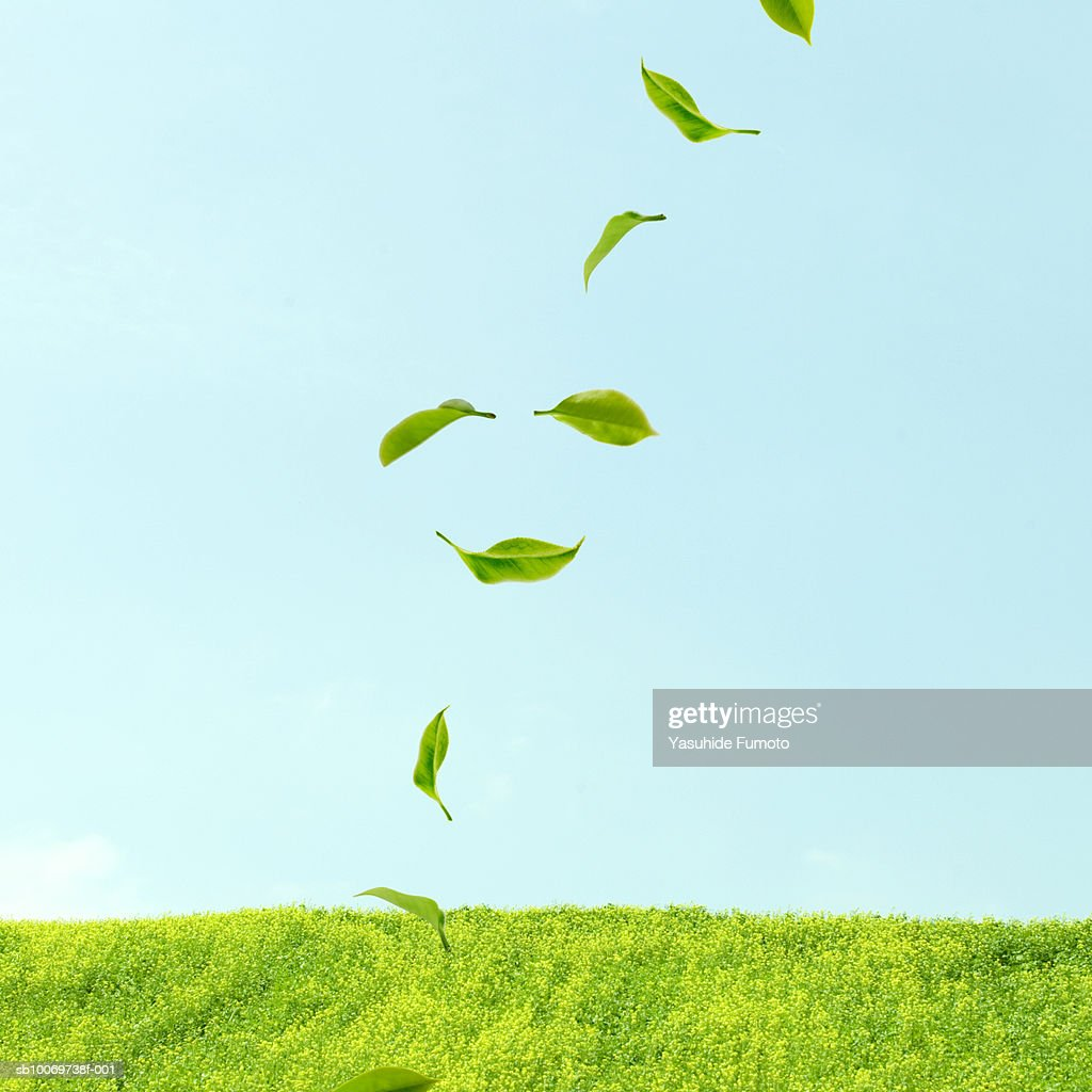 Leaves floating over grass : Stock Photo