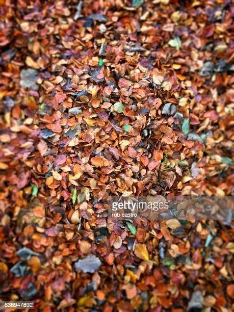 Leaves in Blarney