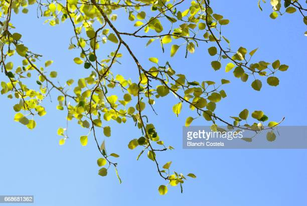 Leaves in the wind against the blue sky