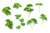 Leaves of parsley isolated on white background. Top view