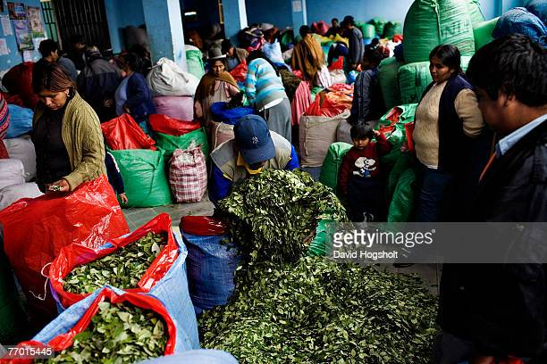 Leaves of the coca plant being repacked into smaller bags to be sold in smaller outlets around town January 31 2007 in the central coca market in La...