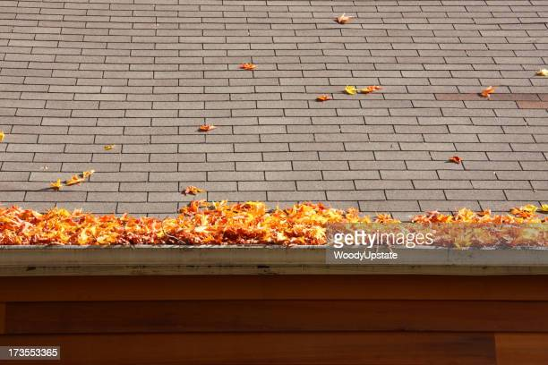 Leaves on a Roof