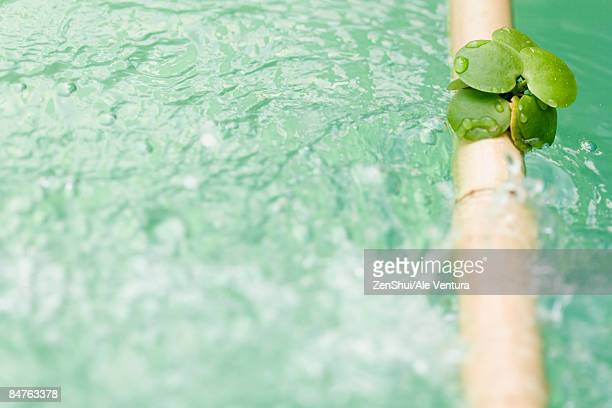 Leaves on bamboo pole extended across water