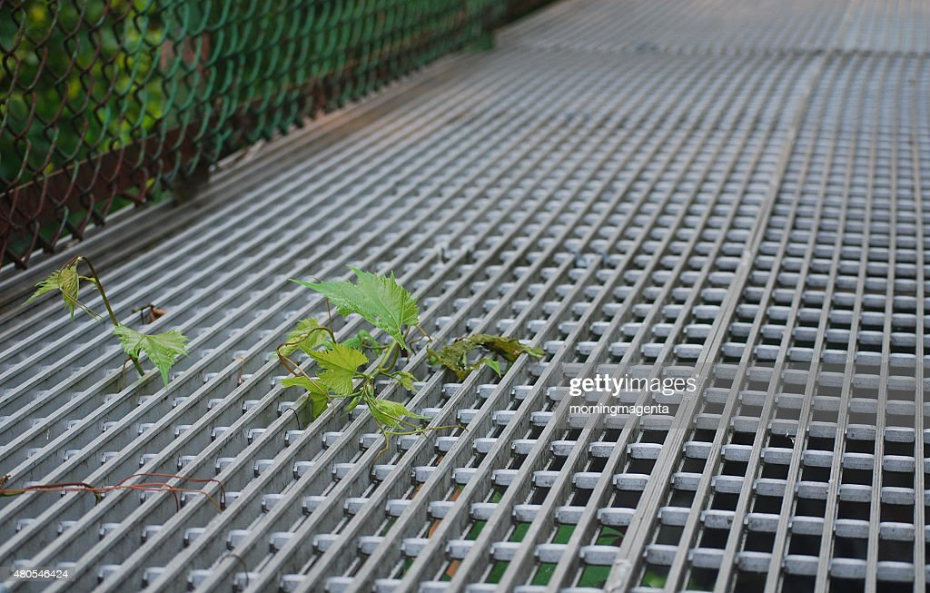 Leaves on Footbridge : Stock Photo