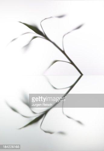 Leaves on plexiglass
