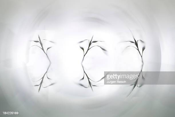 Leaves on plexiglass