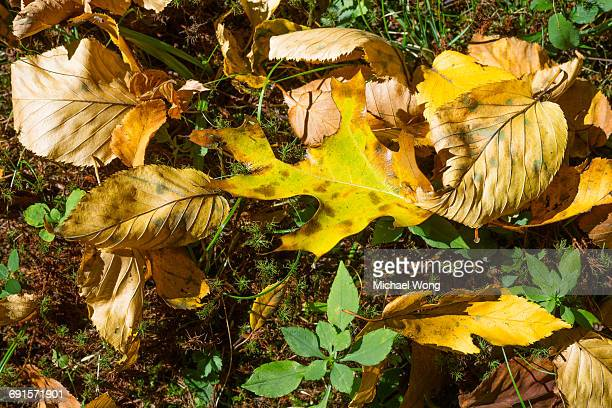 Leaves on the ground during Fall