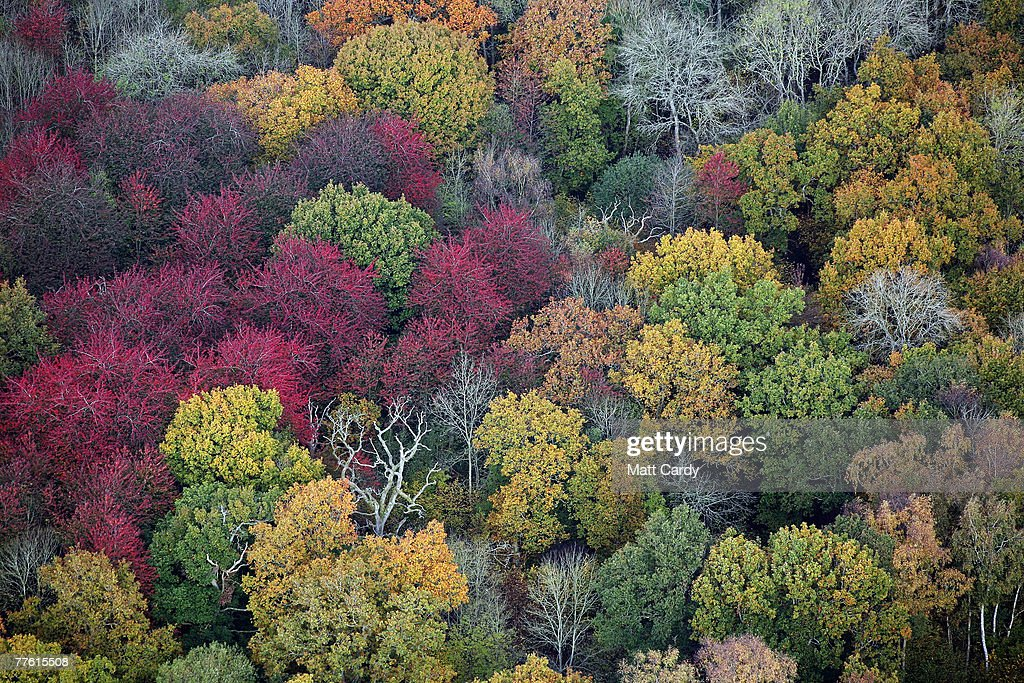 Leaves on trees can be seen changing colour in the grounds of Westonbirt Arboretum near Tetbury, on November 1 2007 in Gloucestershire, England. Tree experts claim that the very wet summer and drier autumn has meant 2007 is one of the most spectacular autumns of recent times.