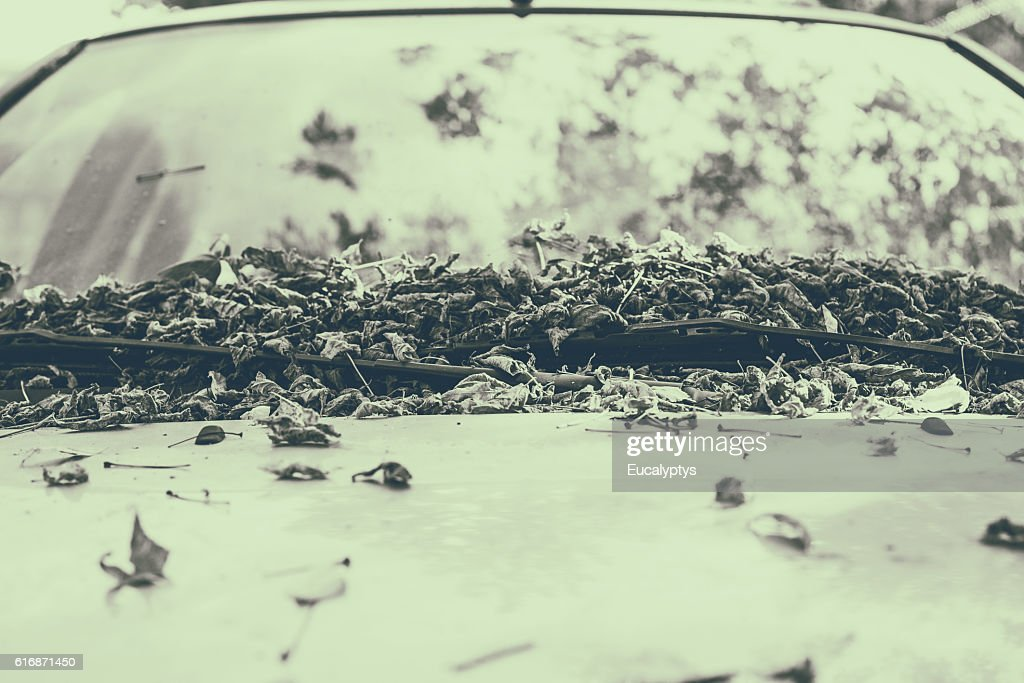Leaves on white car : Stock Photo