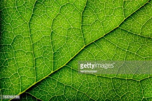 Leaves Series
