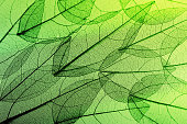 leaves skeleton background. Nature abstraction
