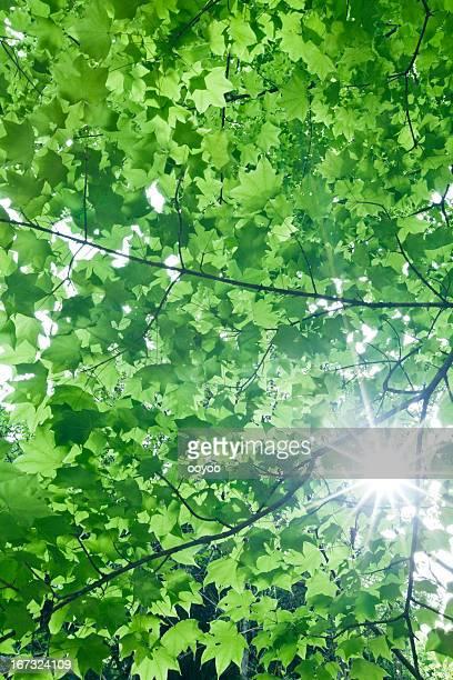 葉、太陽の光