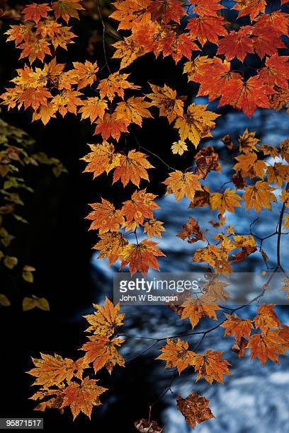 leaves Yudaki falls in background