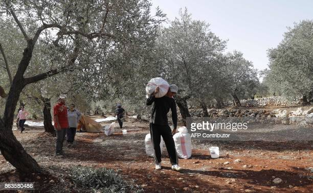 A Lebanese farmer carries sacks of harvested olives as he walks through a field in the town of Batroumin north of Beirut on October 20 2017 Lebanons...