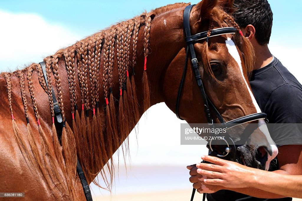 A Lebanese man handles a horse during a horse race festival on the coast shore of the city of Sidon, south Lebanon, on May 29, 2016. / AFP / MAHMOUD