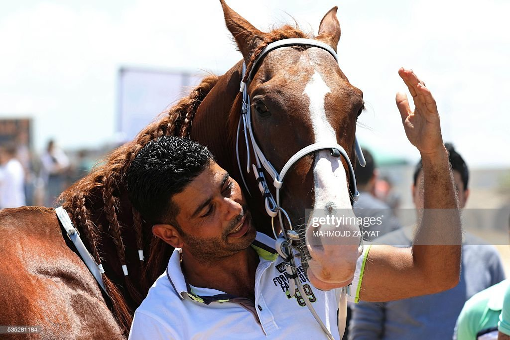 A Lebanese man handles a horse during a horse race festival on the coast shore of the city of Sidon, south Lebanon, on May 29, 2016. ZAYYAT