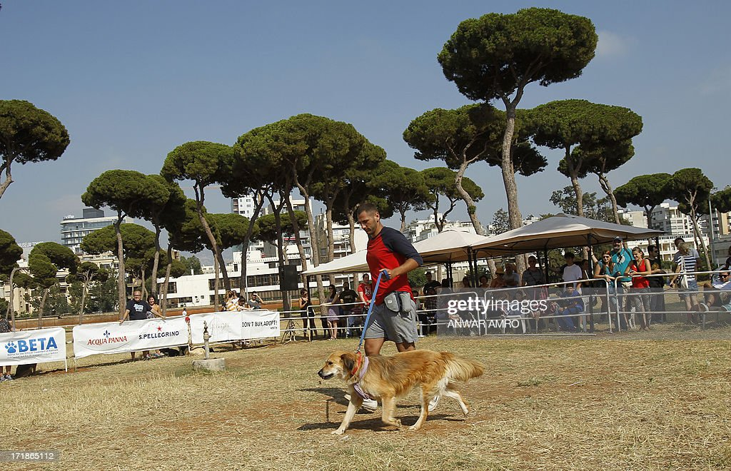 A Lebanese man walks with his dog in the arena during the Beirut for the Ethical Treatment of Animals (BETA) dog show in Beirut, which holds contests to name 'best dog', 'cutest puppy', and 'best dog costume' in addition to 12 other categories on June 29, 2013. The show is one of BETA's major fundraisers to try to improve the welfare of animals in the region and to stop the abuse against them.