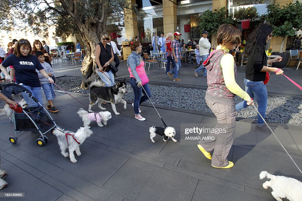 Lebanese people walk their dogs along the Corniche during march organised by Beirut for the Ethical Treatment of Animals (BETA) in the capital on October 6, 2013 in support of the improvement of animal welfare in the region and to stop the abuse against them.