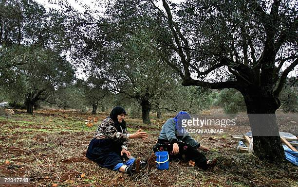 Lebanese women take a break from picking up olives in the southern Lebanese village of Kfar Kila 01 November 2006 Olive trees are grown in almost all...