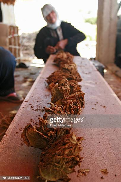 Lebanon, Beirut, Woman working with tobacco
