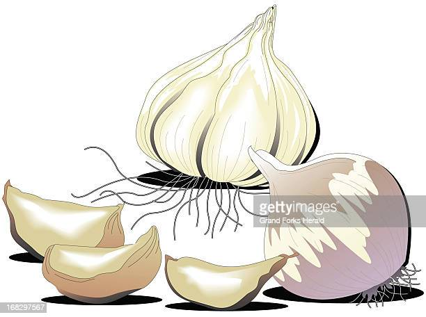 Lee Hulteng color illustration of garlic cloves