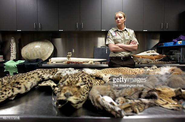 LeeAnn Bies US Fish and Wildlife service officer looks around a room of confiscated items at the US Fish and Wildlife Service Office of Law...