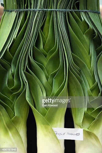 Leeks are displayed inside at RHS London Harvest Festival Show on October 7 2014 in London England Growers from across the UK come together for the...