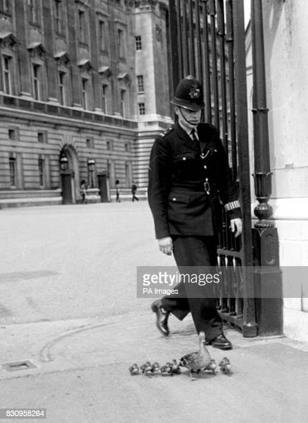 Leftright leftright In review order and led by mother duck the ducklings march out of a gateway of Buckingham Palace with a policeman as rearguardThe...