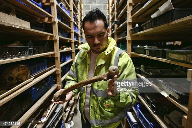 A leg bone is checked in a drying room by Chris Gerontinis an archaeologist at the Museum of London Archaeology department on April 16 2015 in London...